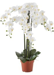 Kunstbloem «Orchidee XXL», bpc living bonprix collection