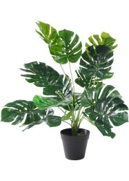Kunstplant «Monstera», bpc living bonprix collection