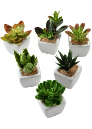 Kunstplanten (6-dlg. set), bpc living bonprix collection