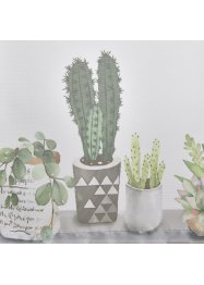 Valletje met cactus, bpc living bonprix collection