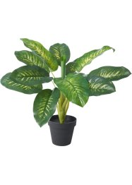 Kunstplant Dieffenbachia, bpc living bonprix collection